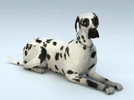 Dalmatian Dog 3d model