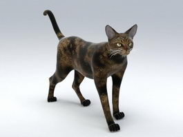 Maine Coon Cat 3d preview