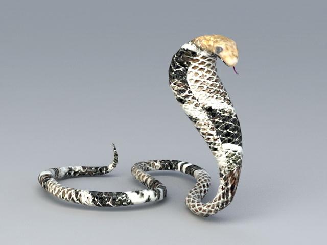 Black King Cobra 3d model rendered image