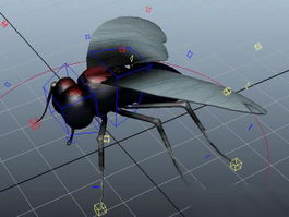 Fly Insect Rig 3d model
