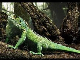 Green Lizard 3d model