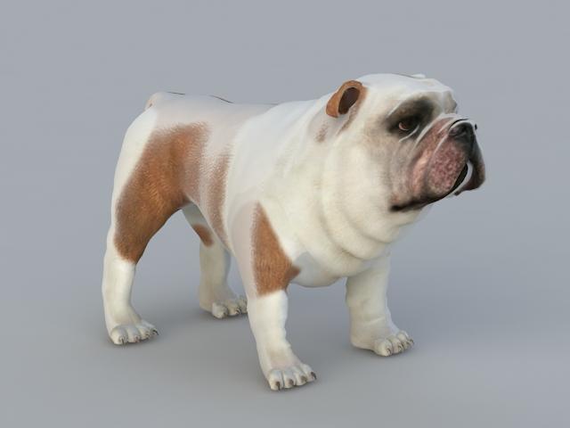 Bulldog Pug 3d model rendered image