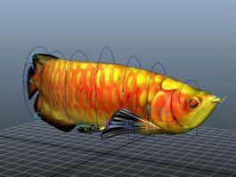 Arowana Fish Animated Rig 3d model