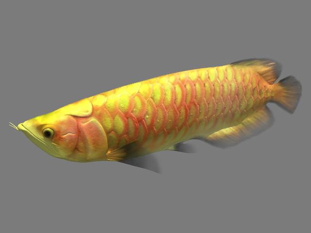 Arowana Fish Animated Rig 3d model rendered image