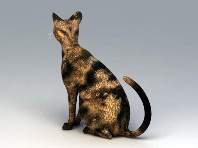 American Shorthair Cat 3d rendering