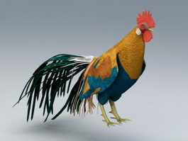 Beautiful Rooster 3d model