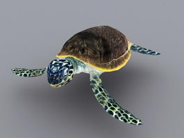 Green Sea Turtle Animated Rig 3d model