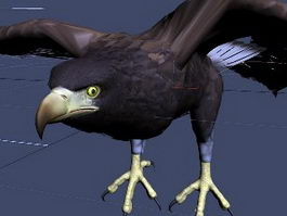 Realistic Eagle Animated Rig 3d model