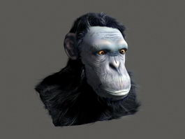 Realistic Chimpanzee Head 3d model