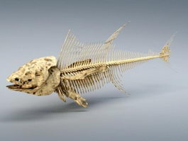 Tuna Fish Skeleton 3d model