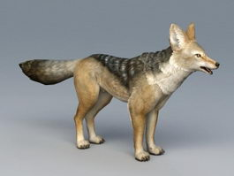 Black-backed Jackal 3d model