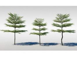 Kalahari Terminalia Tree 3d model