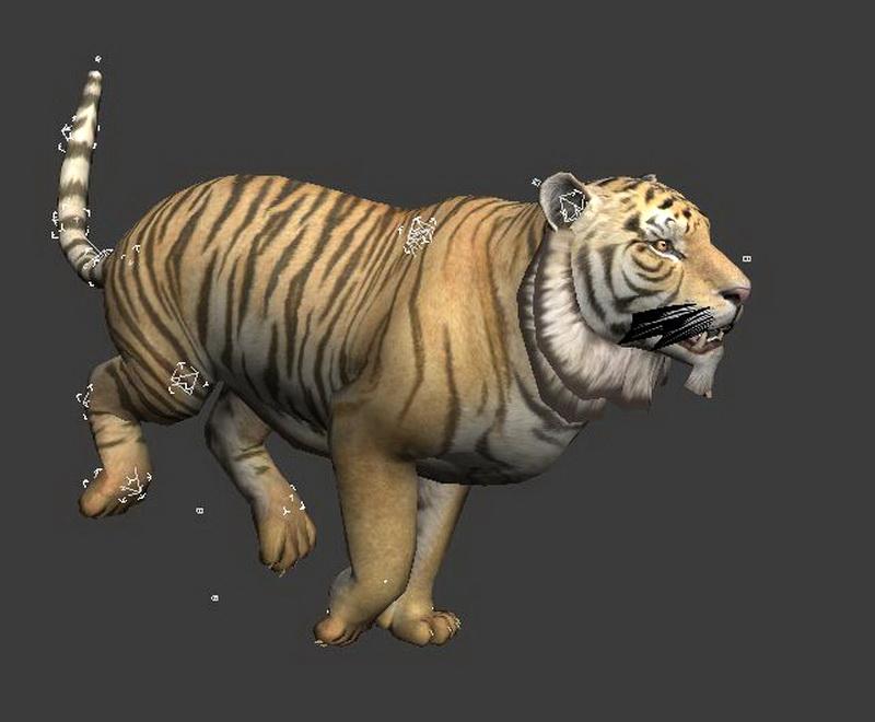 Tiger Running Animation 3d Model 3ds Max Autodesk Fbx