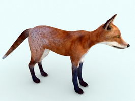 Red Fox Rigged 3d model