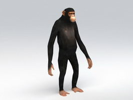 Animated Chimpanzee Rig 3d model