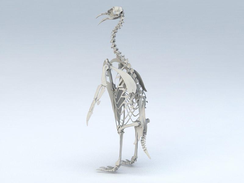 Emperor Penguin Skeleton 3d model 3ds Max,Object files ...