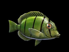 Green Tang Fish 3d model