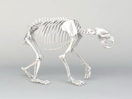 Grizzly Bear Skeleton 3d model