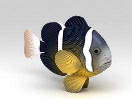 Clarks Anemonefish 3d model