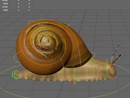 Snail Rig 3d model
