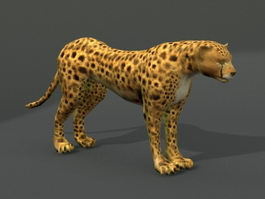 Southern African Cheetah 3d model