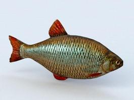 Carp Fish 3d model