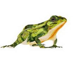 Green Frog Rig 3d model