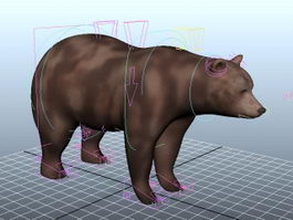 Brown Bear Rig 3d model