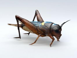 Field Cricket 3d model