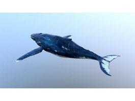 Baleen Whale 3d model