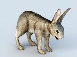 Hare Rabbit 3d model