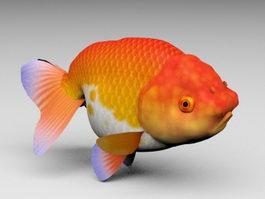 Lionhead Goldfish 3d model