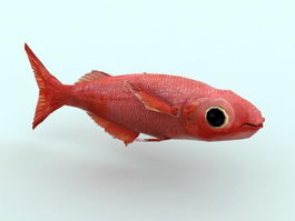 Red Fish 3d model