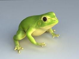 Green Tree Frog 3d model