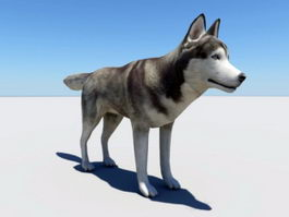 Husky Dog 3d model