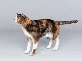 Calico Cat Rig 3d model