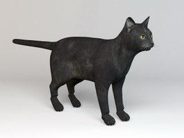 Black Cat Rig 3d model