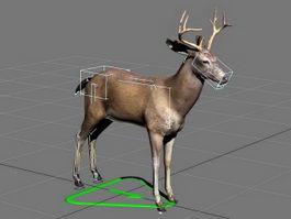 Swamp Deer Rig 3d model