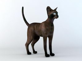 Tonkinese Cat 3d preview