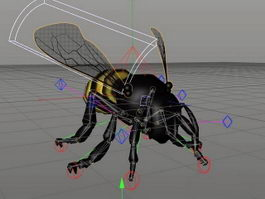 Honey Bee Rig 3d model