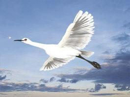Egret Bird 3d model