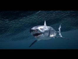 Shark Underwater 3d model
