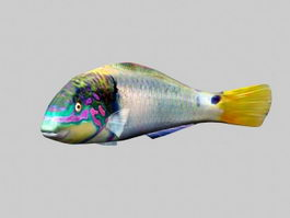 Blue Gourami Fish 3d model