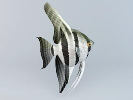 Freshwater Angelfish 3d model