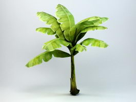 Dwarf Banana Tree 3d model