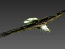 Animated Eagle Rig 3d model