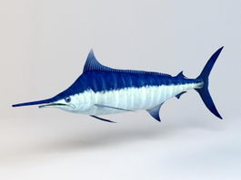 Atlantic Blue Marlin 3d model