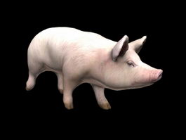 Domestic Pig 3d model