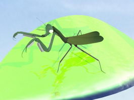Green Mantis 3d model