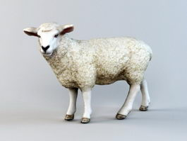 Sheep Low Poly 3d model